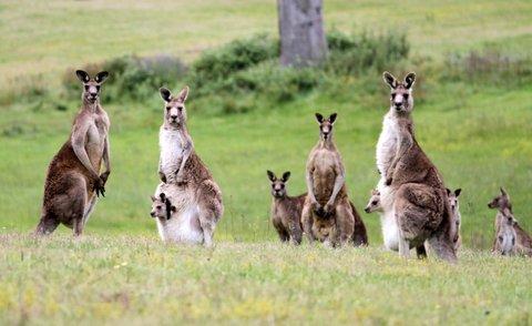 aa20f1d8 Kangaroo Hill 2 | JanDance