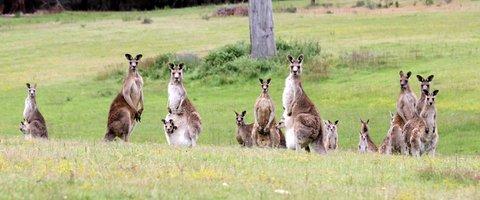 24f205c6 Kangaroo Hill 3 | JanDance